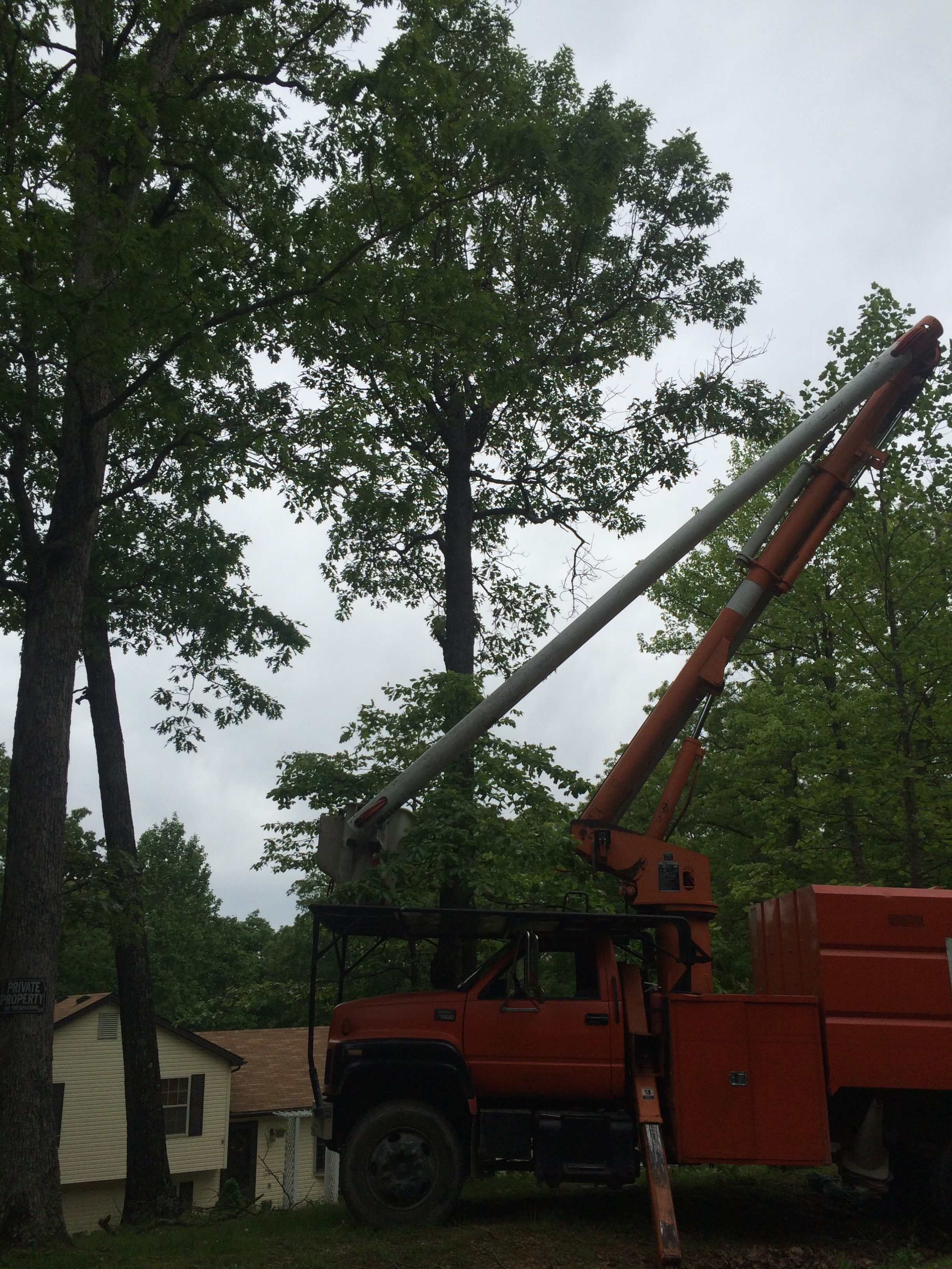 Top arborist in louisville